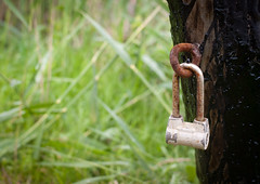 The Padlock (lemmingby) Tags: lake green leaves travels trips belarus padlock roseta braslav otherwheres braslavlakes rosetamansion drivyaty