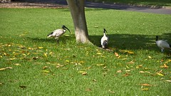 Australia - Sydney (AroundtheWorldwithKid) Tags: raw sydney australia queensland newsouthwales rtw noosaheads oceania travelwithchildren travelwithkid australiaeasterncoast