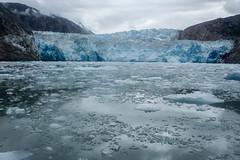 _MG_5034a (markbyzewski) Tags: alaska ugly iceberg tracyarm southsawyerglacier