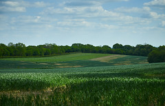 Fresh field (Modesto Vega) Tags: tree green field grass landscape spring nikon outdoor farm surrey crop cultivation earlyspring reigate d600 theweald surreyfield