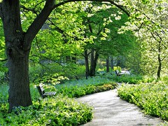 Sunshine and Bluebells (Cher12861) Tags: trees sunlight green leaves landscape spring camino path beautifullight illuminated archway pathway mortonarboretum virginiabluebells lisleillinois groundcovergarden may2016
