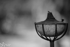 Lamp (Rafael Baptista) Tags: lamp blackwhite