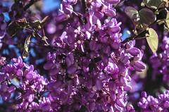 2016050100264 (jolucasmar) Tags: madrid primavera azul luces paisaje amarillo sombras puestasdesol panormica cursodefotografia rivasvaciamadrid 06naturaleza