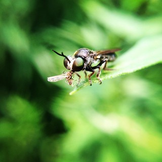 It's a bug-eat-bug world. #photojojomacro
