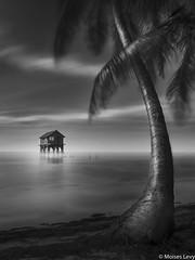 My Paradise (Moises Levy L) Tags: longexposure bw water blackwhite islandia paradise belize bn palmera
