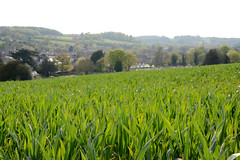 Old Amersham (Jenn Byrne Photos) Tags: old green town view outdoor crops greenbelt overlooking amersham