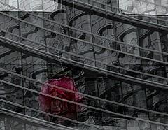 una rosa riflessa in un grigio palazzo di citt (lory6093) Tags: milano rosa fantasia fiore palazzo riflessi bianconero gaeaulenti