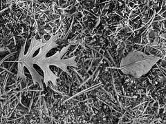 Acquaintances (wmweibel) Tags: winter blackandwhite oklahoma frost ground portfolio