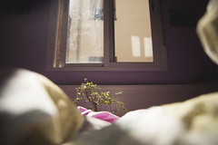 Acercndose al pequeo rbol Bonsai de Noelia. (www.rojoverdeyazul.es) Tags: ventana window rbol tree bonsai japanese japons hojas branches ramas leafs luz pequeo small planta plant autor lvaro bueno espaa spain madrid
