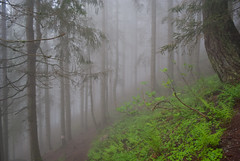 mysterious greenwood (DeCo2912) Tags: wood mist forest schweiz switzerland nebel svizzera wald uri arnisee