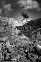 Monolithos No.01 (Sebastian (sibbiblue)) Tags: blackandwhite griechenland greece fineart bw monochrome mastinlab urlaub tree rhodos mai fujixpro2 2016 pfingstferien fujifilm monolithos