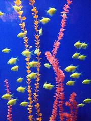 (daffodilly) Tags: connecticut mystic aquariums mysticaquarium