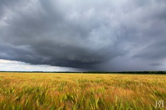 Atypique (NeoNature) Tags: sky cloud storm france nature field barley rain canon countryside curtain horizon pluie structure ciel normandie nuage campagne normandy calvados rideau orage champ orge stormscape