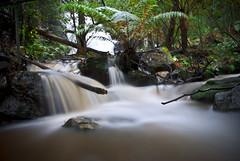 The Junction (edwinemmerick) Tags: longexposure fern nature rock creek waterfall nikon rainforest stream australia le nsw slowshutter edwin lawson d60 emmerick junctionfalls edwinemmerick