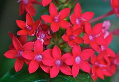 A real standout (Deb Jones1) Tags: flowers red flower macro nature beauty canon garden botanical outdoors flora bloom flickrduel debjones1