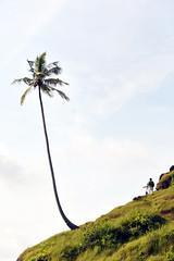Cliff of Love (eternal_ag0ny) Tags: sea sky cliff india tree nikon coconut goa nikkor 18200mm d300s