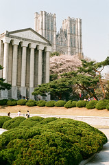 South Korea - Seoul - Kyung Hee University One of the most beautiful campus in Korea (ThomasLecomte) Tags: 35mm canon campus university korea seoul universidad cherryblossom filmcamera canona1  core  corea  kyunghee sel kyungheeuniversity