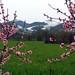A12 Rossi Marco La primavera avanza
