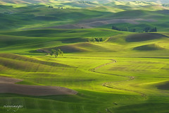Days in the Palouse (Vinnyimages) Tags: sunset green washington spring washingtonstate colfax greenhills palouse easternwashington steptoebutte vinnyimages wwwvinnyimagescom