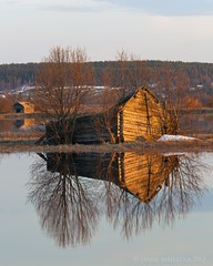 Tulva-aitta (ikithule) Tags: cloud snow reflection building ice nature water clouds barn forest finland koivu flood lapland birch lumi puu vesi mets lappi luonto pilvet j puita pilvi rakennus heijastus kevt tulva puut springflood aitta ylitornio torniojokilaakso kevttulva floodbarn ikithule torniojokiriver jokivarsi tulvaaitta