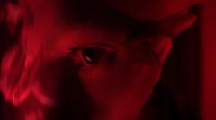 Week Twenty (George Rley) Tags: red roses eye exams psycho montage week20 tested 52weeks teleidoscope georgeriley