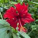 Flora dell'Amazzonia