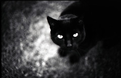 (Wayne Stevenson) Tags: bw white black film halloween contrast cat canon high scary dof kodak zombie f14 creepy a1 shallow vignette phobia xtol intermediate thecatwhoturnedonandoff so331 ldlnoir