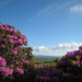 Blooms to Galtees