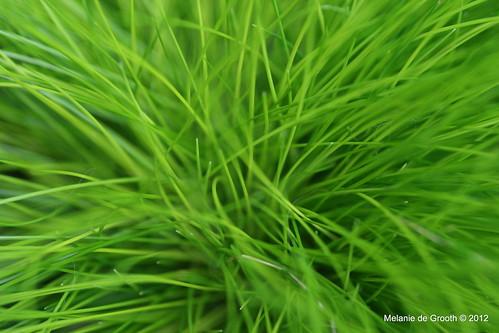 Grass Like Plant