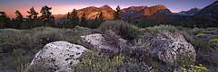 Sunset in Mammoth (Joe Ganster) Tags: california ca flowers trees light mountain mountains beauty pine america landscape us