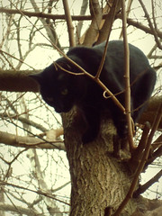 Down The Tree (Robert S. Photography) Tags: nyc cats colour tree cat samsung down climbing brookyn 2014 st150f