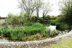 DSC_1182 Calcot (PeaTJay) Tags: flowers trees plants macro nature water gardens fauna outdoors reading flora lakes parks micro closeups ponds berkshire bushes calcot tilehurst nikond750