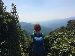 "La Réserve de Monteverde <a style=""margin-left:10px; font-size:0.8em;"" href=""http://www.flickr.com/photos/127723101@N04/26671685570/"" target=""_blank"">@flickr</a>"