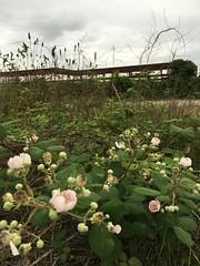 (raddyann) Tags: flower construction industrial blackberry district steel north raleigh warehouse carolina beams