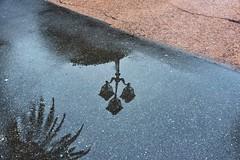 It's raining for a week (Renato Pizzutti) Tags: ombra palma lampione sestrilevante pozzanghera nikond750 renatopizzutti