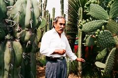 Teotihuacan (Alvaro Arregui) Tags: leica cactus mexico 24 40 portra suma 160 minilux summarit leicaminilux kodakportra kodakportra160 summarit4024