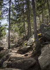 21 May 16 Forest Trail (ethanbeute) Tags: forest colorado hiking hike coloradosprings hikingtrail pikenationalforest greenmountainfalls forested foresttrail catamounttrail catamountreservoir catamountcreek