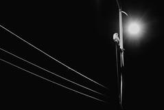 Owl (jessicachlee) Tags: light night austin wildlife powerlines negativespace owl lightanddark
