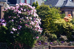 Front Garden (NikWatt) Tags: macro photo edinburgh live handheld 105mm greatcolors nikwatt edinburghphotographerssigma lenssigmasonysony a580greatscotsgreatcolorscotlandthe braidspolarizedsunnyplantssigmasony a580greatscots scotlandwindows