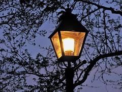 Lamplight (Cher12861) Tags: light lamp bluehour goldenglow lilaciapark lombardillinois treebranchsilhouettes