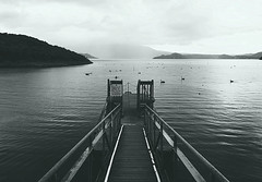 Take a Boat (FlavioSarescia) Tags: ocean travel sea newzealand summer blackandwhite lake nature water landscape swan jetty blackswan