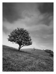 Pitstone Hill (Damian_Ward) Tags: morning tree landscape photography chilterns buckinghamshire bucks pitstone thechilterns chilternhills pitstonehill damianward damianward