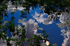 Pond in the Sky (Kristian Francke) Tags: blue light sky plants cloud plant canada abstract green nature water vancouver pond afternoon bc natural metro pentax surreal columbia british ripples tamron k50