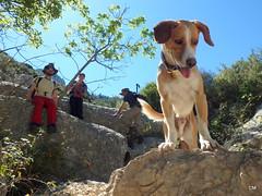 Wildson dalt. (.carleS) Tags: del olympus perro gos barranc wildson caeduiker tg850 galitero