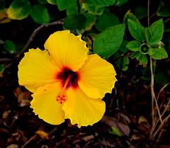 Favignana (Isole Egadi) - Stabilimento Florio (ikimuled) Tags: favignana egadi stabilimentoflorio tonnara archeologiaindustriale fiori