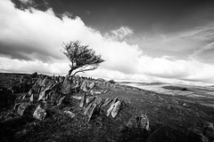 365A5115 (Nazgul 9) Tags: winter bw white black tree wales landscape south scene brecon beacons