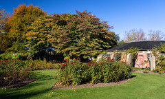 Autumn Rose Garden (Jocey K) Tags: flowers autumn trees newzealand christchurch roses sky plants building leaves gardens shadows lawn may rosegarden monavale