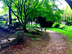 The Magical Tree Path (semonalarochelle) Tags: park tree bench weed woods stream tulips path stones branches gothic soil trunk magical mythical