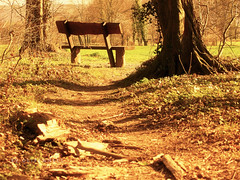 a waiting bench after a long forest walk (olipennell) Tags: forest bench bank olympus karlsruhe wald epl3 rüppurr