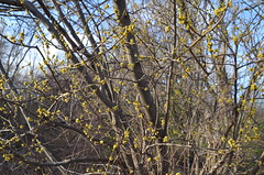 DSC_0142 (rlg) Tags: march saturday 31 2012 fpr 0331 201203 nikonp5100 20120331 03312012